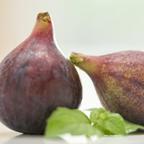 Fig & Ivy
